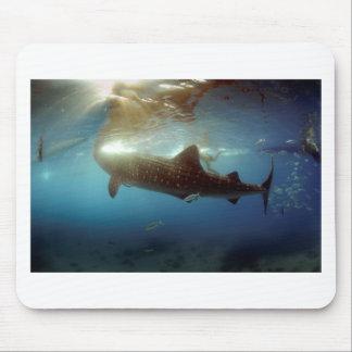 Whale shark feeding mousepads