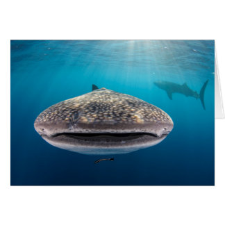 Whale Shark, Front view, Indonesia Card