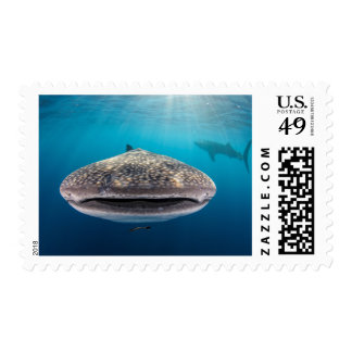 Whale Shark, Front view, Indonesia Postage