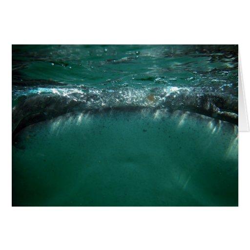 Whale Shark, Isla Holbox, Mexico Card