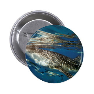 Whale shark Oslob Philippines Buttons