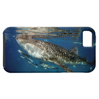 Whale shark Oslob Philippines iPhone 5 Case