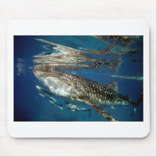Whale shark Oslob Philippines Mouse Pad