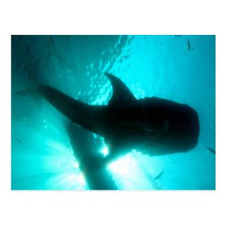 Whale shark silhouette postcards