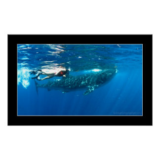 Whale shark snorkeling poster