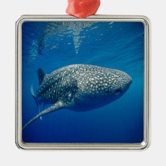 Whale Shark Square Metal Christmas Ornament