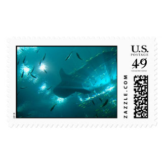 Whale Shark stamps