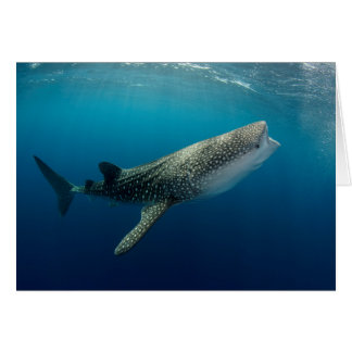 Whale Shark Swimming Card
