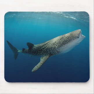Whale Shark Swimming Mouse Pad