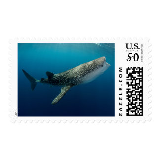 Whale Shark Swimming Postage