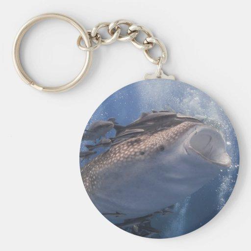Whale shark swimming underwater key chains