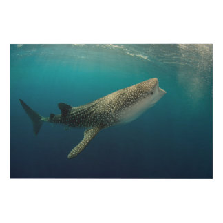 Whale Shark Swimming Wood Wall Decor