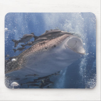 Whale shark underwater mouse pad
