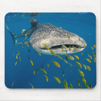 Whale Shark with fish, Indonesia Mouse Pad