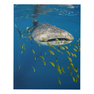 Whale Shark with fish, Indonesia Panel Wall Art