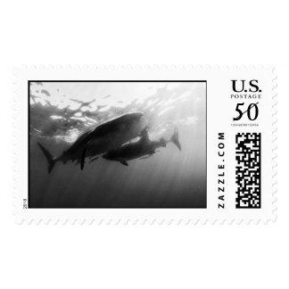 Whale Sharks Isla Mujeres Postage