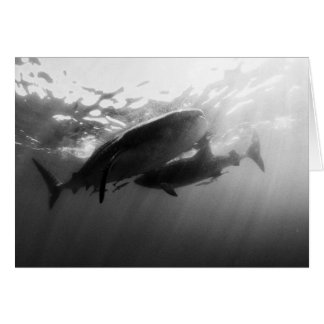 Whale Sharks Notecard Greeting Card