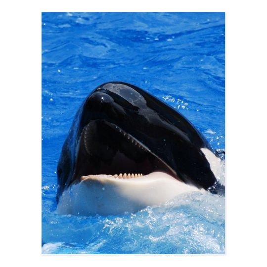 Whale Sounds Postcard