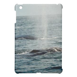 Whale Spay iPad Mini Cover