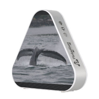 whale speaker