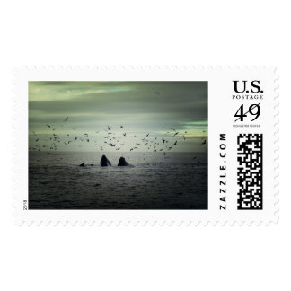 Whale Stamps
