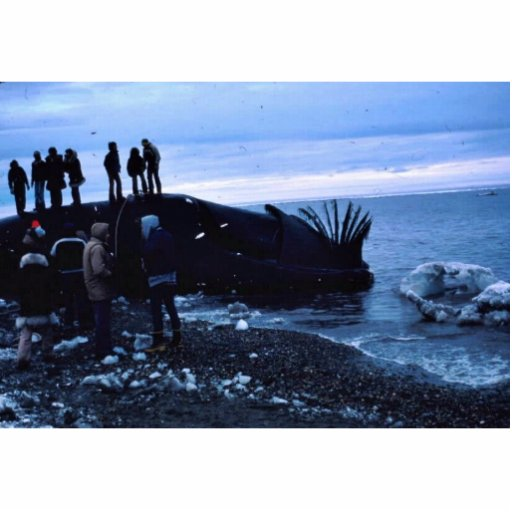 Whale Standing Photo Sculpture