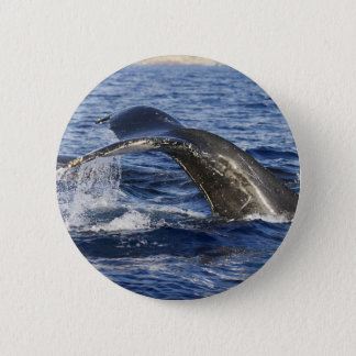 Whale Tail Button