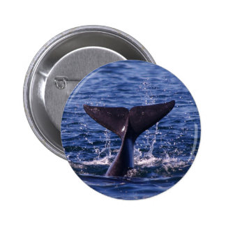 Whale Tail Pinback Button