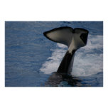 Whale Tail Posters