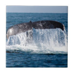 Whale Tail Tile