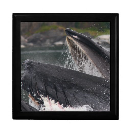 whale trinket boxes