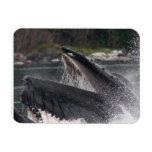 whale vinyl magnets