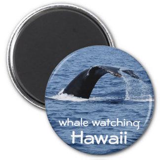 Whale Watching, Hawaii Fridge Magnets