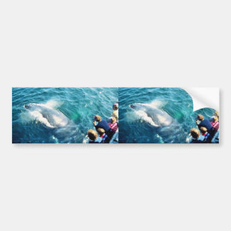 Whale Watching Humpback Bumper Stickers