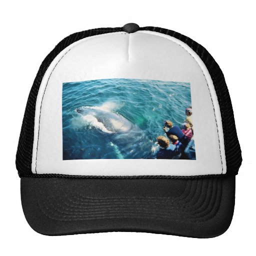 Whale Watching (Humpback) Trucker Hat