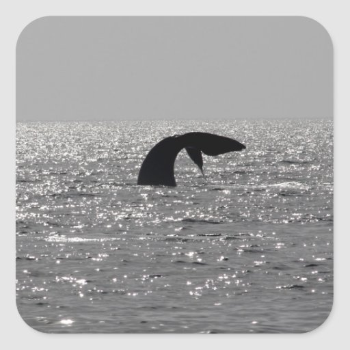 Whale-watching - Southern right whale print Sticker