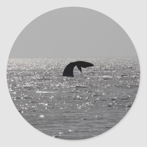 Whale-watching - Southern right whale print Round Sticker