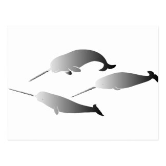 whale whales narwal narwhale unicorn scuba diving postcard