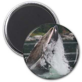 whales 2 inch round magnet