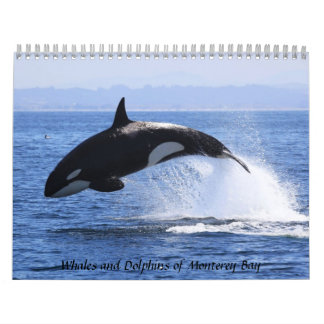 Whales and Dolphins of Monterey Bay Calendar