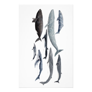 Whales and right whales stationery