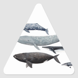 Whales and right whales triangle sticker