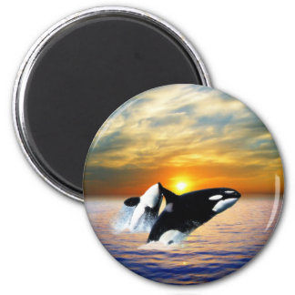 Whales at sunset 2 inch round magnet
