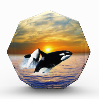 Whales at sunset award