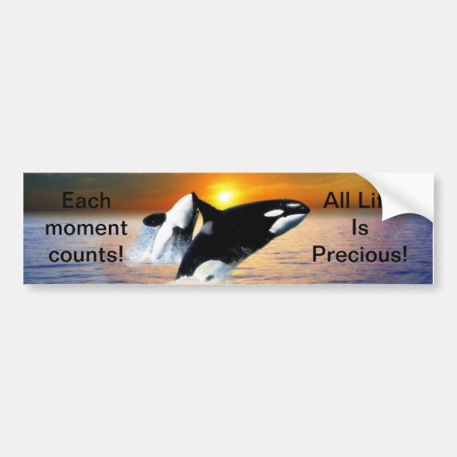 Whales at sunset bumper stickers