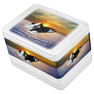 Whales at sunset drink cooler
