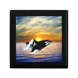 Whales at sunset gift box