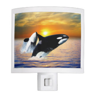 Whales at sunset night light