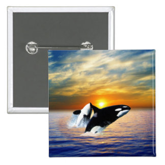 Whales at sunset pinback button