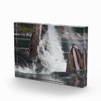 whales acrylic award